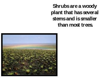 The Tundra Biome PowerPoint Presentation