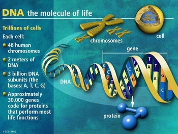 The Ultimate DNA Powerpoint for High School Biology
