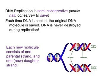 DNA Notes