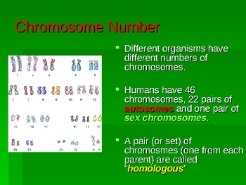 The Ultimate Meiosis Powerpoint for High School Biology