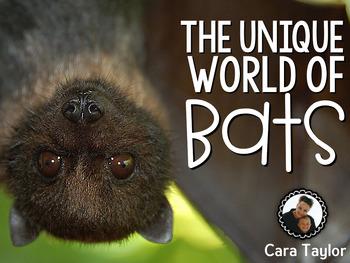 The Unique World of Bats