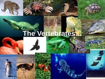 The Vertebrates