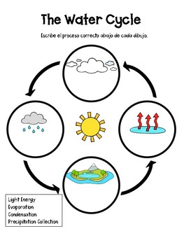 The Water Cycle Graphic Organizer