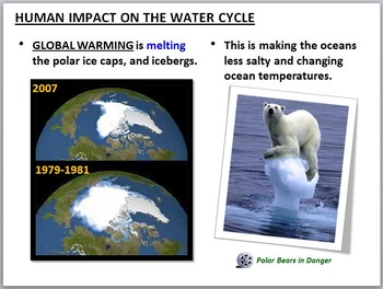 The Water Cycle - PowerPoint {Editable}