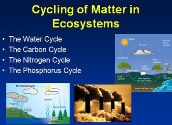 Carbon and nitrogen cycle teaching resources teachers pay teachers the water cycle the carbon cycle the nitrogen cycle and the phosphorus cycle ccuart Gallery