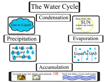 The Water Cycle, The Hydrologic Cycle, Activity for science notebook