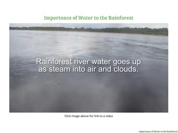 The Water Cycle and Why Water is Important in the Rainforest PDF