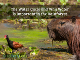The Water Cycle & Why Water is Important in the Rainforest