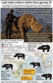 The White Rhino  - close to extinction