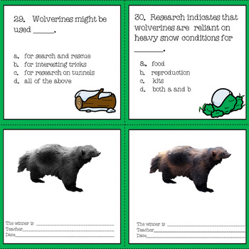 Wolverine Nonfiction Reading Passages and Comprehension Questions No Prep