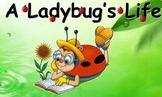 The Wonderful Life of a Ladybug