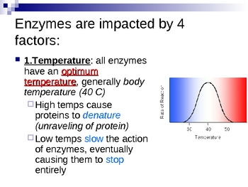 The Wonderful World of Enzymes