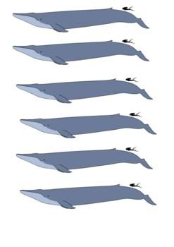 The Blue Whale Handout