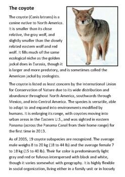 The coyote Handout