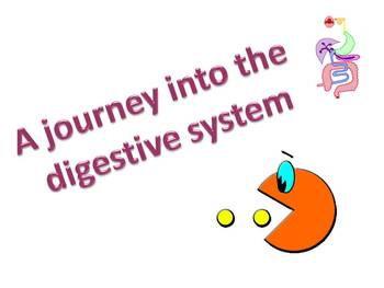 The digestive system, structure and function