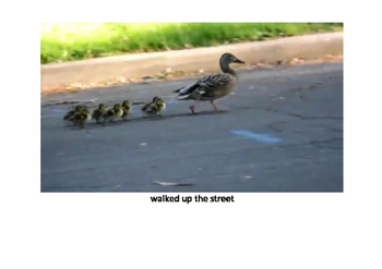 The ducklings' trip