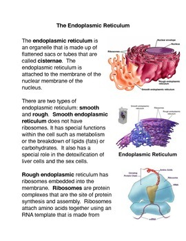 The endoplasmic reticulum Common Core Activity