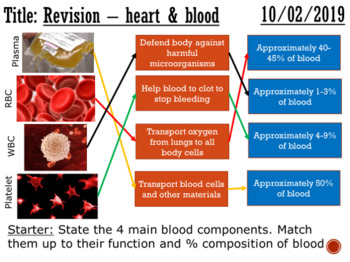 The heart and blood vessels (revision) - complete lesson