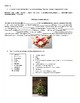 The history of the Christmas tree - Reading Comprehension/ Vocabulary Worksheet