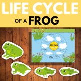 The life cycle of a Frog - Busy book page