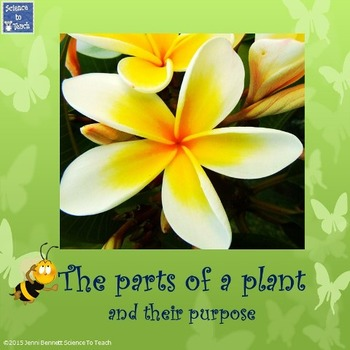 The parts of a plant and their purpose