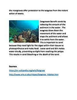 The sea grass ecosystem