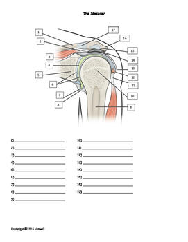 The Shoulder quiz or worksheet