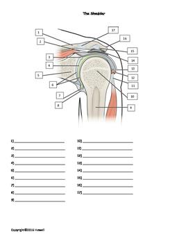 The Shoulder quiz or worksheet