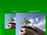 Theme: Plants in Spanish. Plantas y palabras relacionanas