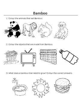 Theme Worksheet - Bamboo