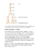 Theory of Heredity | High school science