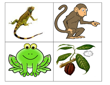 Silly Monkey Swallowed a things like a Frog sequencing cut paste hands on