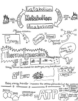 Metabolism & Thermodynamics Sketch Notes Doodles W/Tchr Guide & Student Notes!