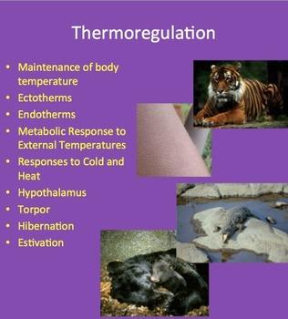 Thermoregulation - Maintenance of Internal Body Temperature - Senior Biology