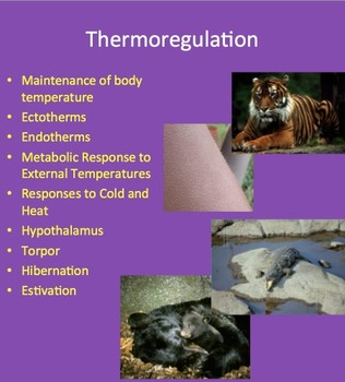 Thermoregulation - Maintenance of Internal Body Temperature - Senior Biology