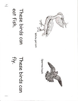 These Birds Can- a non-fiction guided reading book