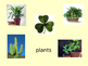 Things That Are Green PowerPoint Presentation