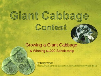 Third Grade Cabbage Contest