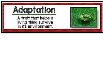 Third Grade Science Content Words