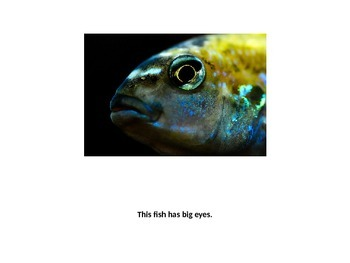 This Fish Book