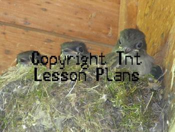 Three Baby Birds In Nest Stock Image