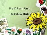 Plant Vocabulary Words