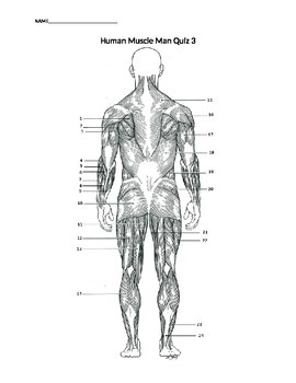 Three Muscle Man Quizzes