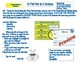 Three Step Interview Graphic Organizer in French