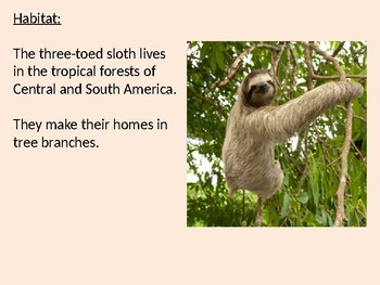 Three Toed Sloth - Power Point facts information pictures