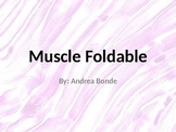 Three Types of Muscle - Foldable