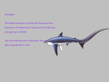 Thresher Shark - Power Point Information Facts Pictures