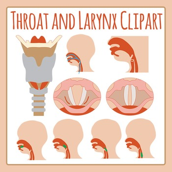 Throat and Larynx Human Anatomy Diagrams Clip Art Set for Commercial Use