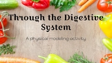 Through the Digestive System - An Interactive Lab Activity