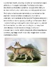 Thylacine (Tasmanian tiger) Handout